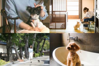 愛犬も喜ぶ、ペットと泊まれる宿で家族と気兼ねなく寛ぐ
