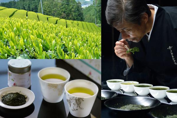 創業約460年、京都宇治の老舗茶舗・上林春松本店厳選の日本茶2