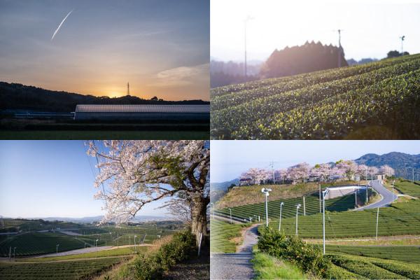 :大自然の澄んだ空気で深呼吸、朝日を浴びて一日を始めるヨガ体験2
