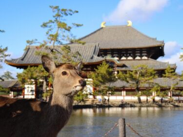 奈良 東大寺の大仏と無病息災の火の粉舞う二月堂のお水取り