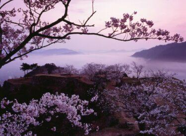 関西で日帰りや一泊で行ける春の絶景「竹田城跡」3月~4月は夜桜ライトアップも実施