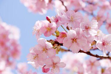 桜満開!全国にあるレストランルアンとおすすめのお花見スポット2021